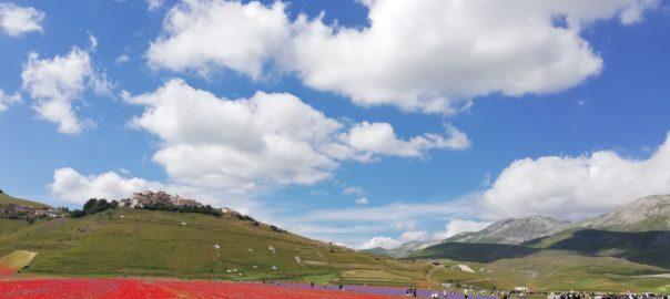 Fioritura Piana del Castelluccio-Pierangela Vallese